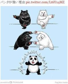 「ハッ!」とさせられる「パンダが強い理由」 Black Bear + Polar Bear = Panda Bear!