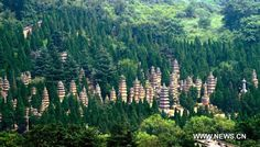 Pagoda Forest, Shaolin Temple. Dengfeng, China. Buddhist.