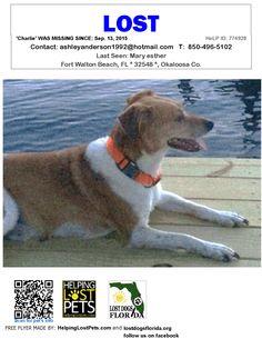 Lost Dog - Beagle - Fort Walton Beach, FL, United States