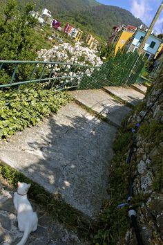 When You Realize Life is Good … Corniglia, Italy.