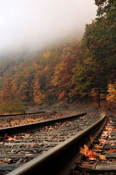 I'd love taking a scenic train ride through the autumn woodlands Trains, Autumn Cozy, Autumn Aesthetic, All Nature, Train Tracks, Image Hd, Beautiful Landscapes, The Great Outdoors, Railroad Tracks