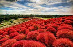 Park-Hitachi Seaside - Hitachinaka, Japan  15 Fabulous Places on the Planet to Visit