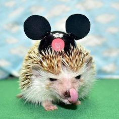 Princess Pricklepants, Mouseketeer.