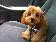 Funny Animal Pictures - View our collection of cute and funny pet videos and pics. New funny animal pictures and videos submitted daily. Cavapoo Puppies, Cute Puppies, Dogs And Puppies, Cute Dogs, Doggies, Silly Dogs, Cute Animal Videos, Funny Animal Pictures, Funny Animals