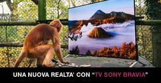 Lemurs and langurs watch life-like tv as part of their - sony europe Ps4, Lg 4k, Teen Friends, Saturday Night Fever, John Travolta, Pick Up Lines, Nature Images, Smart Tv, Picture Show