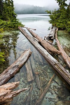 Cold clear water at Mowich lake, Mount Rainier.