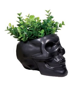 Look at this Black Skull Planter on #zulily today!