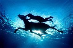 Water, Horse, Swimming together ~ Bliss. Gorgeous underwater photo by Zena Holloway Horse Photography, Underwater Photography, Color Photography, My Horse, Horse Riding, Horse Art, Underwater Pictures, Summer Dream, Realism Art