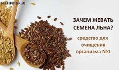 Зачем жевать семена льна — панацея от многих болезней #life #iсеменальна #интересно #lifestyle #самоеинтересное