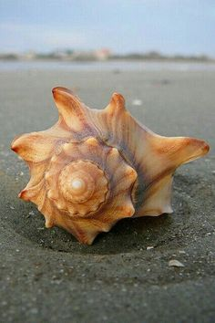 Shell laying on the beach