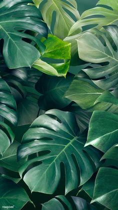 Green monstera leaves background design resource  | premium image by rawpixel.com / Adj Dark Green Aesthetic, Plant Aesthetic, Nature Aesthetic, Aesthetic Colors, Aesthetic Clothes, Aesthetic Backgrounds, Aesthetic Iphone Wallpaper, Aesthetic Wallpapers, Green Leaf Background