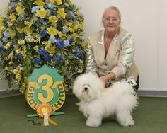 Bolognese is Top Puppy Rare Breed 2015