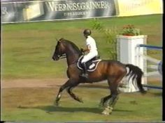#Showjumping #Stallion Evli Cagliostro calmest round of jumping ever!!