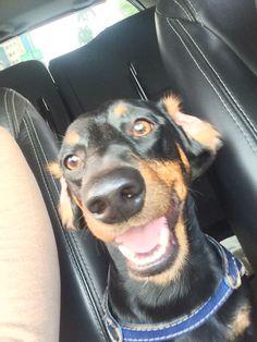 Smile #salsicha #dog #happyness #doglife #basset