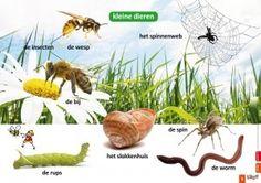 Poster kleine dieren