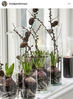 Terrific Pics Eclectic Decor plants Suggestions A strong contemporary way of adorning can be challenging. To get information regarding how to achieve this amazing visua Spring Decoration, Decoration Christmas, Winter Christmas, Christmas Time, Xmas, Art Floral Noel, Deco Floral, Eclectic Decor, Winter Garden