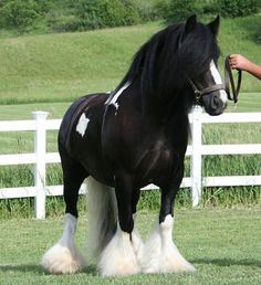 I love this horse