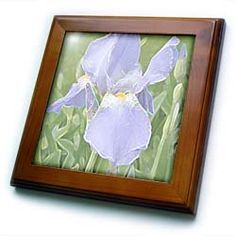 """Patricia Sanders Creations - Lavender Iris Flowers Floral Art - Framed Tiles :           Lavender Iris Flowers Floral Art Framed Tile is 8"""" x 8"""" with a 6"""" x 6"""" high gloss inset ceramic tile, surrounded by a solid wood frame with predrilled keyhole for easy wall mounting.                           **Read more Details : http://gethotprice.com/appin/?t=B005FWK7D8"""
