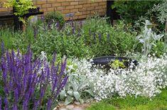 Maj 2013      Våren 2013 bestämde jag mig för att större delen av vår gräsmatta skulle bort. Med mycket slit så var slutligen delar av g...