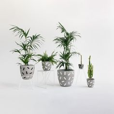 Concrete Planter  Confetti Range  Sizes M L and XL by foxandramona