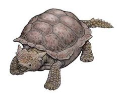 Genyornis | MeiolaniaPrehistoric tortoises that survived into the Holocene from ...
