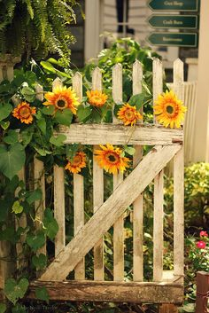 garden gate  and sunflowers