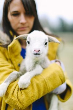 The Colorful Living Project: baby lambs