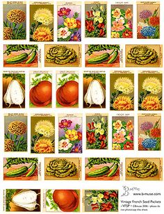 Vintage French seed packets. Wouldn't this make great wrapping paper? #gardening