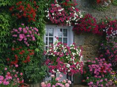 Farmhouse Window Surrounded by Flowers, Ille-et-Vilaine, Brittany, France