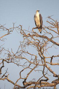 Minneriya National Park, Sri Lanka (www.secretlanka.com)