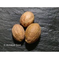La noix de muscade du Brésil est utilisée râpée comme épice pour épicer les viandes, soupes, béchamels, gratins, assaisonner purées et plats à base de pommes de terre en général, légumes, cocktail. Saveur, Eggs, Breakfast, Oui, Comme, Armoire, Cocktail, Minas Gerais, Egg