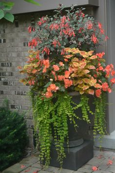 by Detroit Garden Works Garden Works, Garden Art, Garden Ideas, Terrace Ideas, Container Flowers, Container Plants, Container Gardening, Outdoor Planters, Outdoor Gardens