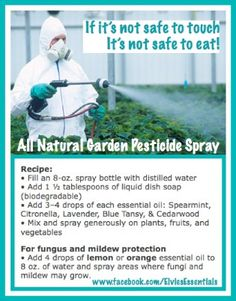 All-Natural Garden Pesticide Spray Recipe: Fill an 8-oz. spray bottle with distilled water. Add 1/2 TB. biodegradable liquid dish soap. Add 3-4 drops each of Spearmint, Citronella, Lavender, Blue Tansy, & Cedarwood essential oils. Mix & spray generously on plants, fruits and vegetables. For fungus & mildew protection check out my Facebook  page: www.facebook.com/elviesessentials Order oils at www.youngliving.org/elvielook #youngliving #essentialoils #naturalgardening