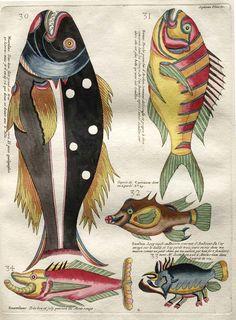 Poissons, Ecrevisses et Crabes, de Diverses Couleu - 1719 - Louis Renard.