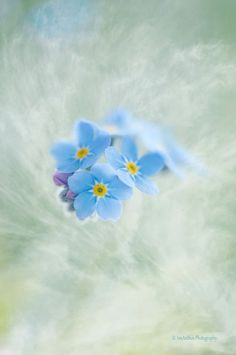 Pastel Flower Print Dreamy Flower Wall by IonAnthosPhotography