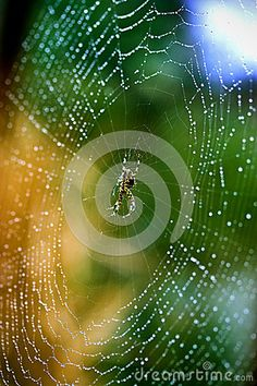 a spider in center of web with raindrops.
