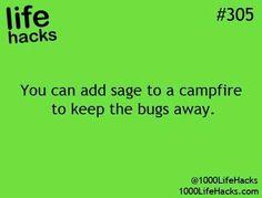 Keep bugs away naturally while camping
