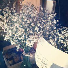 Show Garden Show Flower: [ 花花 ] 滿天星乾燥花