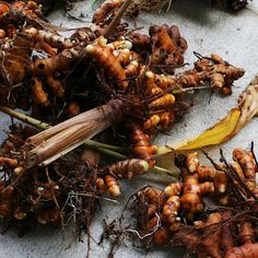 Turmeric is a miracle drug and very tasty! It's easy to grow your own.