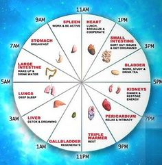 sleep-cycle-organs; o just like a train moving around our bodies, here are the organs and times at which our Qi is moving through, along with their meanings. Based on the above information, the time at which your sleep gets interrupted can predict the probable ailment your body has. They are mentioned below: