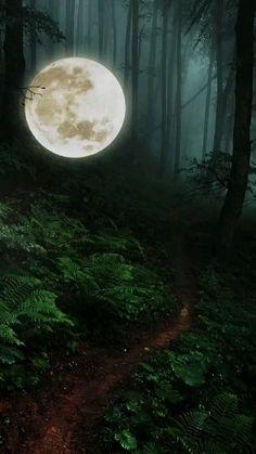 Beautiful Nature Scenes, Beautiful Nature Wallpaper, Beautiful Moon, Amazing Nature, Beautiful Places, Nature Pictures, Cool Pictures, Moving Pictures, Android Wallpaper Vintage