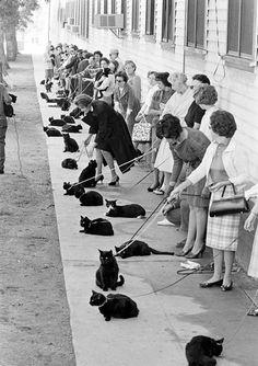 Audition av svarta katter i Hollywood 1961. Fotograferade av Ralph Crane. (troligen för filmen Tales of Terror (1962) i regi av Roger Corman)