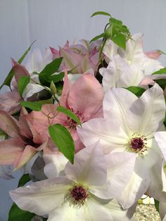 188 best flower identification images on pinterest bulb flowers pink and white clematis white clematis pink flowers planting flowers wedding flowers mightylinksfo