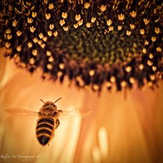 #heaven #bee #insects Photo S, Insects, Bee, Heaven, Art Prints, Art Impressions, Honey Bees, Sky, Heavens