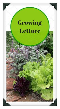 1000 images about vegetable garden tips organic on - When to fertilize vegetable garden ...
