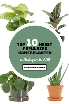 Wil jij graag weten welke kamerplanten populair waren het afgelopen jaar? Check dan deze top 10 populaire kamerplanten op Instagram in 2020! #kamerplanten #planten #plants #indoorplants #populair #favoriet #top10 #2020