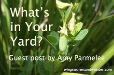 What's in your Yard? Not sure? Discover the wonders in your own yard in today's Wings, Worms, and Wonder guest post by Amy Parmelee!  through for the activity, ideas, and free printables! http://www.wingswormsandwonder.com/whats-in-your-yard/