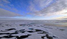Des algues sous la banquise de l'Arctique - ALGUES, BIODIVERSITÉ, ÉCOSYSTÈME, PHYTOPLANCTON   - http://www.zegreenweb.com/sinformer/des-algues-sous-la-banquise-de-larctique,56030