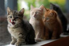 aww kitties