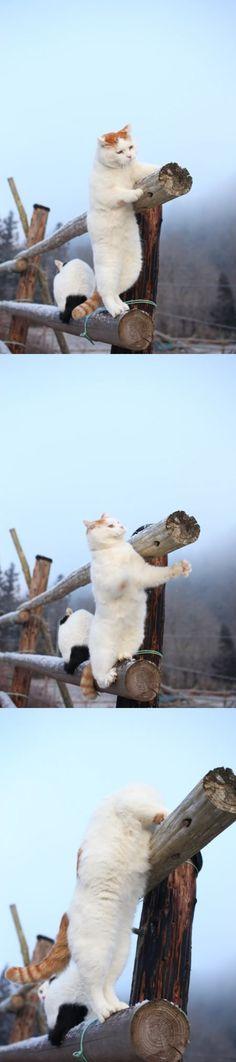 かご猫Blog 2014.01.28 おっと